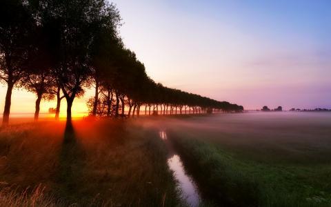 草,黎明,光线,流,雾,树
