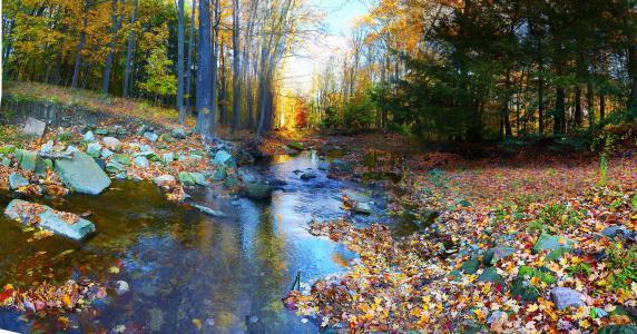 树木,秋季,多彩,森林