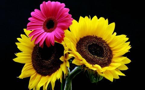向日葵,gerberas,花束