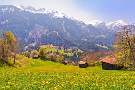 瑞士Berner Oberland高山,丘陵,房屋,树木,景观
