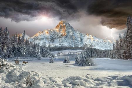 景观,自然,冬天,美女,山,雪,森林,鹿,天空,云,闪电,艾伯塔省,加拿大