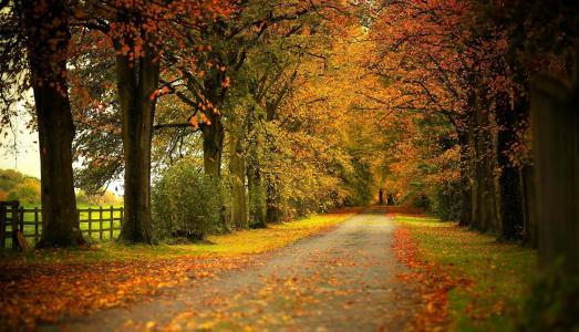 景观,性质,秋季,道路,树木,叶子