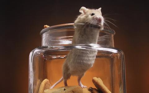 饼干,罐子,老鼠