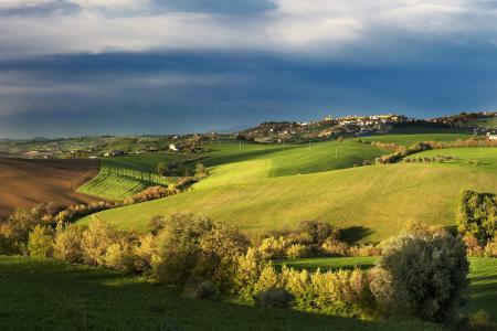 意大利,树木,秋天,字段,托斯卡纳