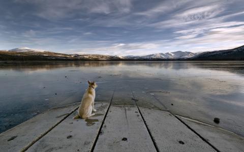 狗,水,天空,寂寞