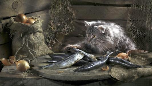 静物,一只猫