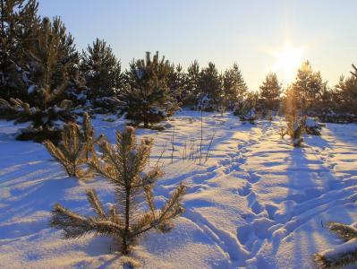 冬天,雪,树木