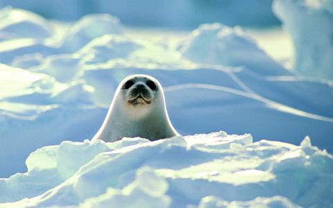 海猫,雪山