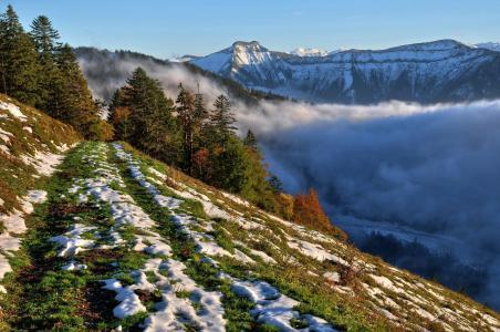 萨尔茨堡,奥地利,山,树,雪,景观