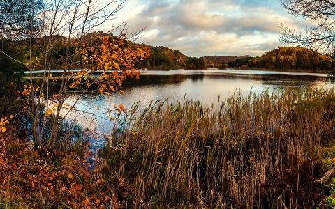 干燥,池塘,沼泽,秋天,草地