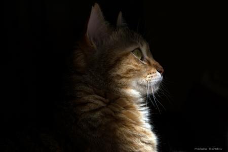 猫,猫,脸,配置文件,阴影,光,胡子
