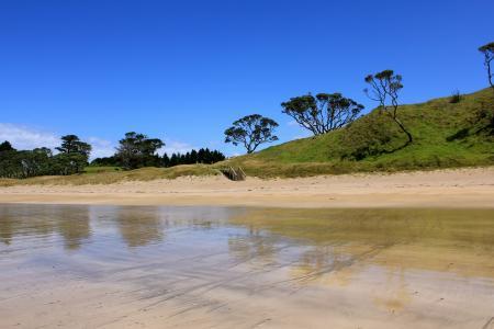 岸,河,湖,水,树木,搁浅,晴朗,楼梯,步骤