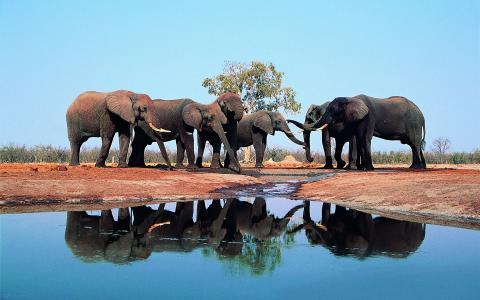 大象,水,树干