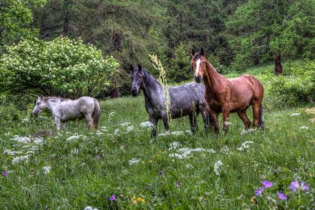 马,马,草坪,草地,花卉,森林