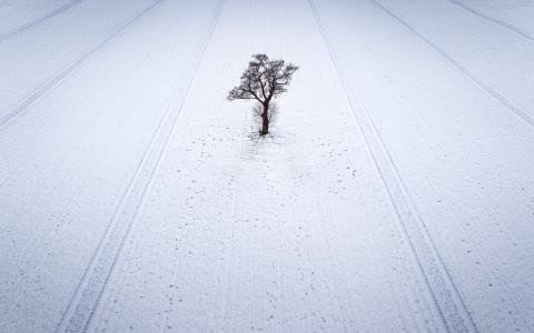 雪地里孤独的树