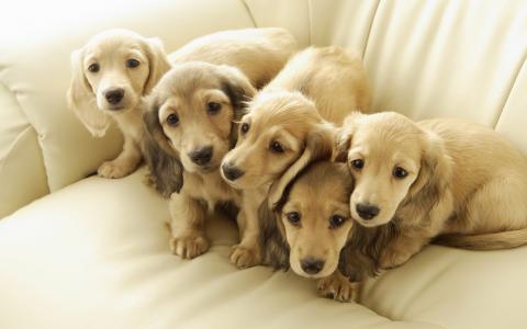 狗,小狗,朋友