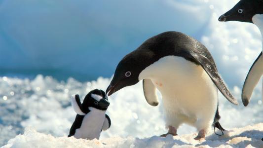 雪,企鹅,玩具