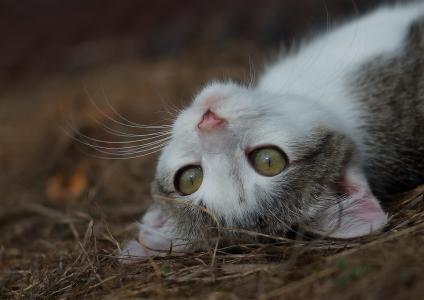 一只小猫,一个枪口。