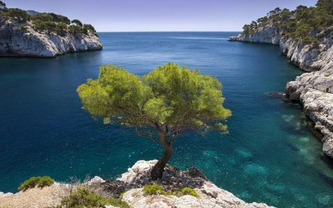 寂寞,松树,成长,在一块岩石上,蓝天,海洋,岩石海岸,树木,悬崖边上的孤独的树