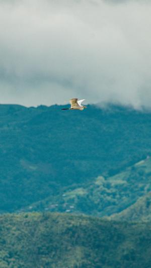 在天空中飞翔的白鹭