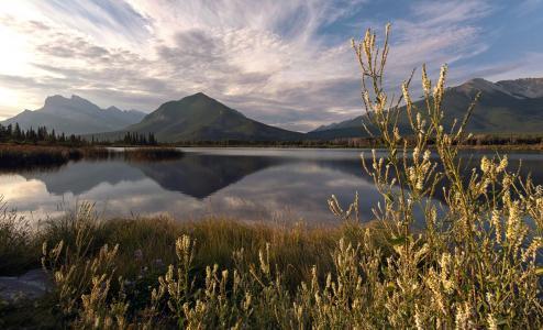 山,湖,反射,夏天