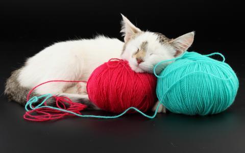 猫,睡觉,壁纸