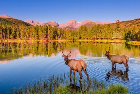 洛矶山国家公园,斯普拉格湖,湖,麋鹿,风景