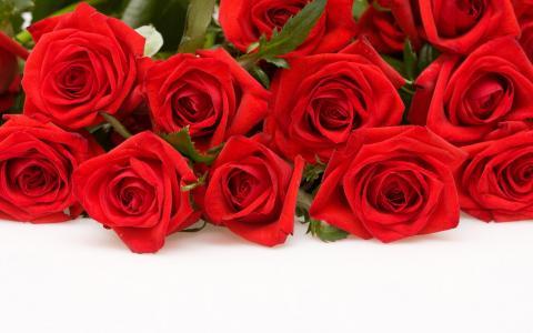 玫瑰,壁纸