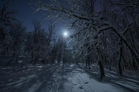 自然,雪,森林,冬天,树木,滑雪,分支,月亮,天空,星星,夜
