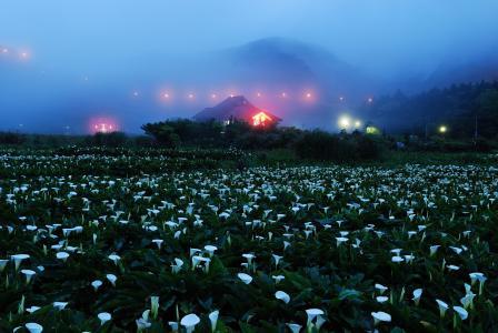 夜,雾,山,房子,灯,场,花,岩石