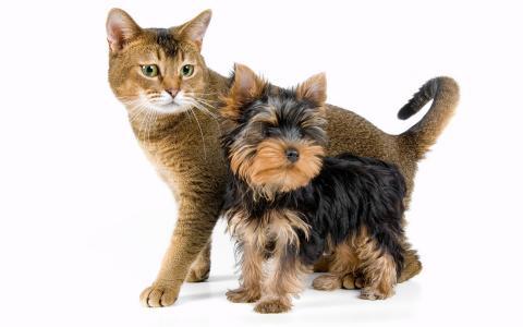 小狗,猫,尾巴