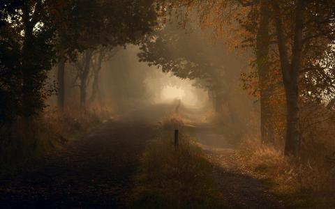 性质,路,早上,秋季,光