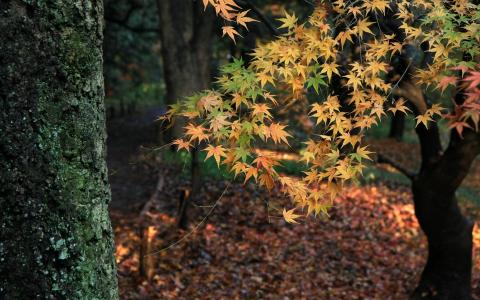 秋天,性质,森林,树木,叶子