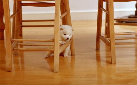 小小狗,白色的爪子