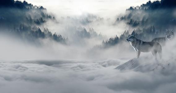 山谷中的雪狼