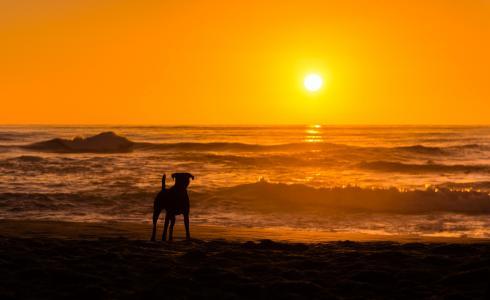 狗,动物,日落,海,海滩,性质,剪影