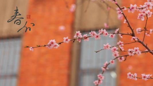 春分时节梅花开