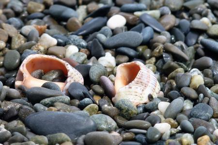 岸,海,研磨,水,贝壳和海,鹅卵石