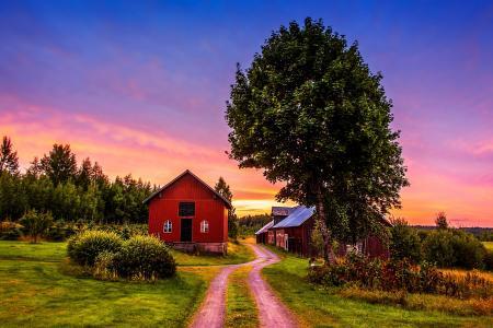 日落,树木,道路,房屋,景观