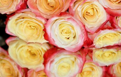 玫瑰,反射