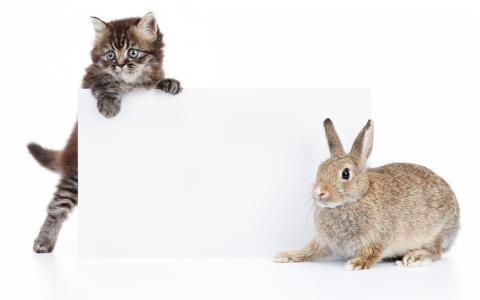 小猫,兔子