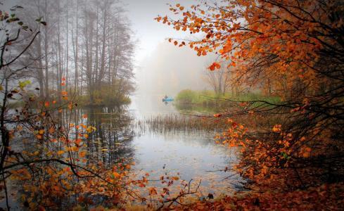 景观,自然,秋季,树,湖,雾,船
