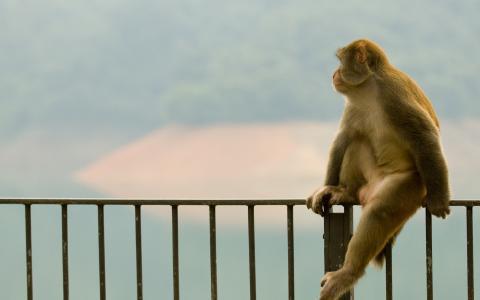 猴子,配置文件