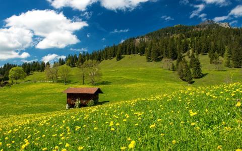在,在,巴伐利亚,高山,壁纸