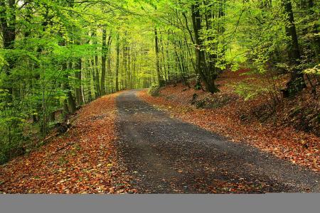 森林,公园,树木,路,景观