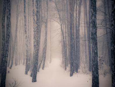 森林,冬天,树木,雪