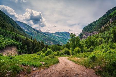 山,路,森林,树木,景观