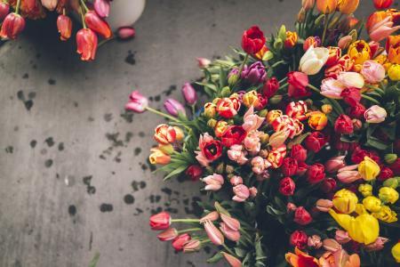 鲜花,郁金香,不同,很多