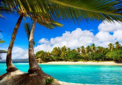 度假,海滩,夏天,热带,海,棕榈树,天堂,海洋