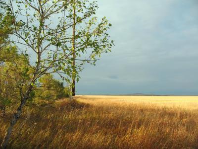秋天,哈萨克斯坦,草原,领域,清洁,处女地,kostanay,天空,小麦